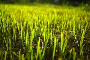 Know About Lawn Aeration