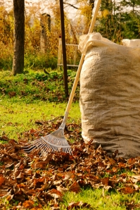 Secret to a leafless lawn