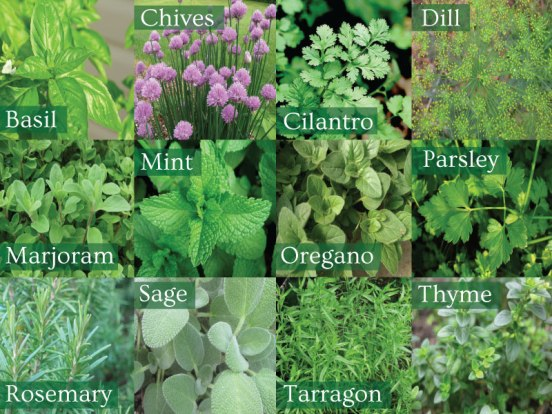 choose from a variety of different herbs