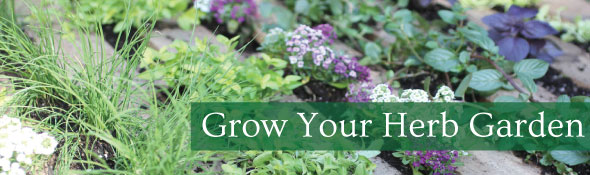 Create Your Herb Garden