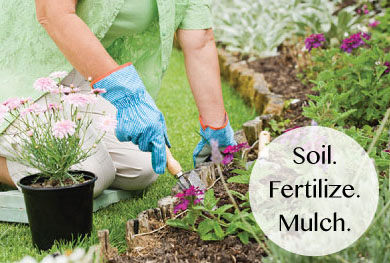 Soil. Fertilize. Mulch.