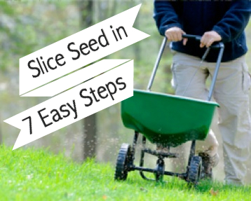 Slice Seed Your Lawn in 7 Easy Steps