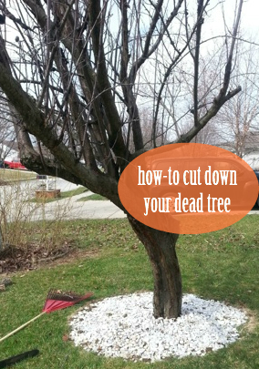 How-To Cut Down Your Tree in 6 Simple Steps