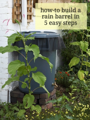 How-to Build a Rain Barrel in 5 Easy Steps