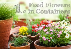 Feed Flowers in Containers
