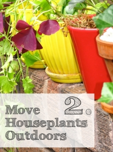 Move Your Houseplants Outside