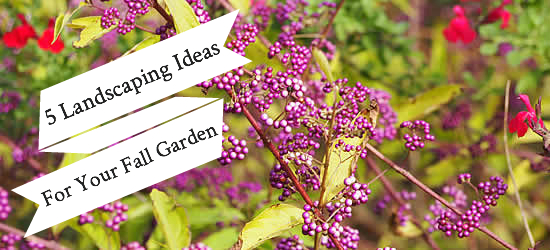 5 Landscaping Ideas for Your Fall Garden